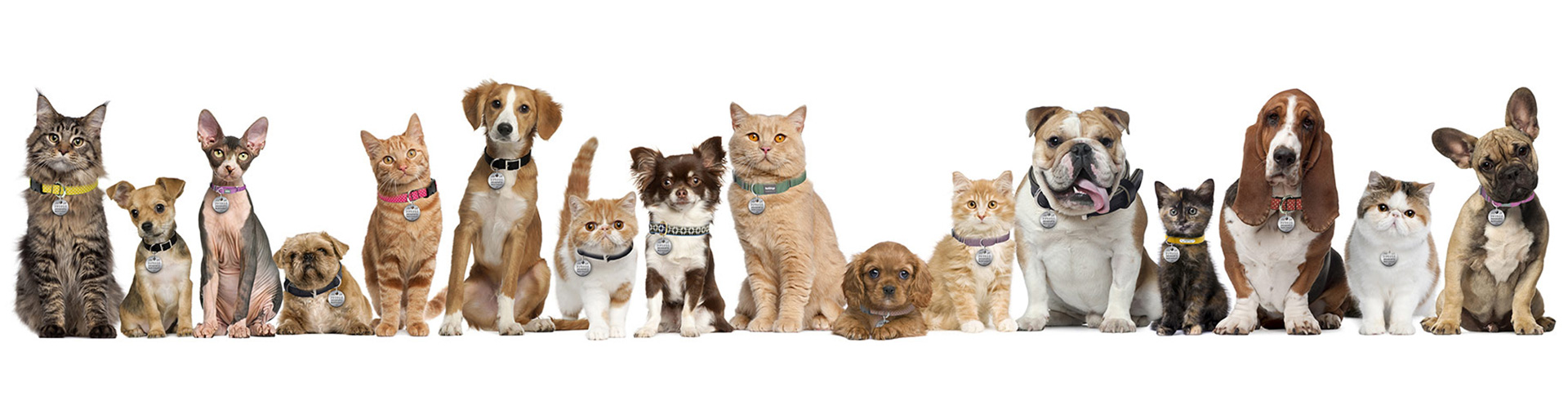 pets-lineup-xlg
